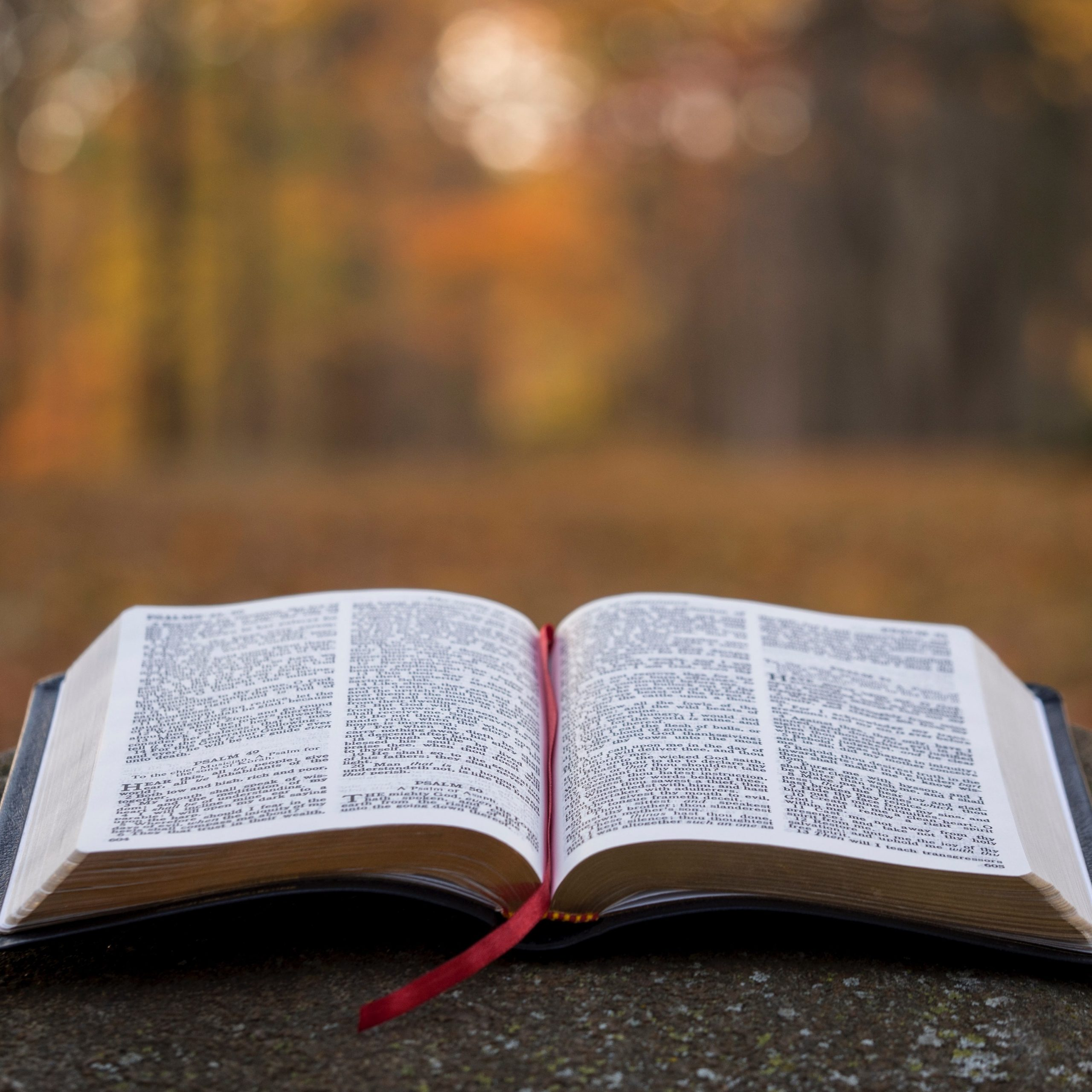 Bible Sunday – 25th October 2020